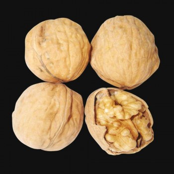 Саженцы грецкого ореха Franquette из Крыма