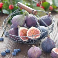 Саженцы инжира Виолетта из Крыма